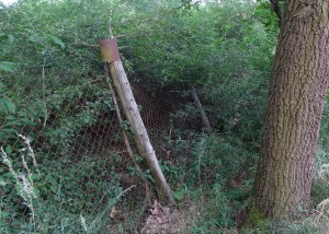 Bäume vor Zaun im Grundstück
